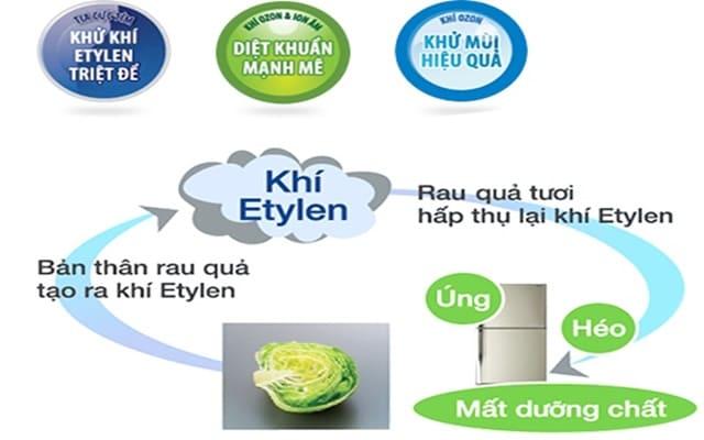 Sự hoạt động của những tia cực tím sẽ loại bỏ khí Etylen làm héo úng rau quả