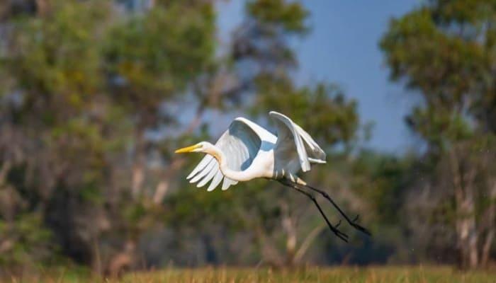 Vườn Quốc gia Tràm Chim với nhiều loài động vật quý hiếm
